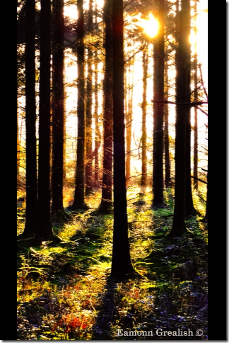 Eamonn, Galway, Cregg Woods, woods, sunset