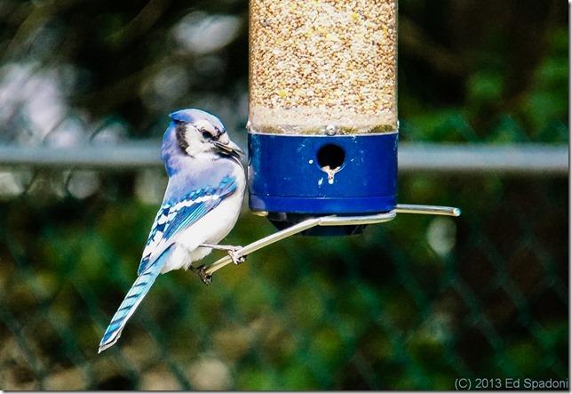 birds, VCL-DH 1758, Sony, NEX