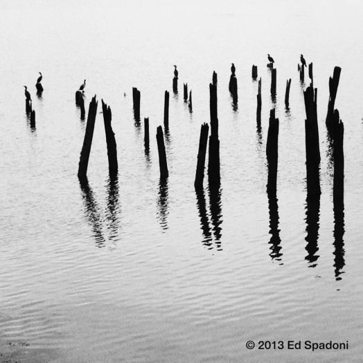 cranes, dock, pilings, bay, harbor