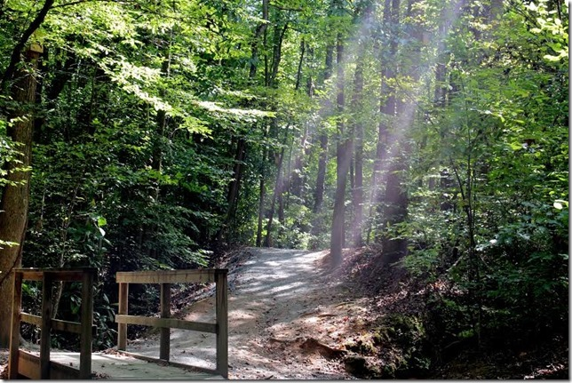 Melodie Sunlit Path